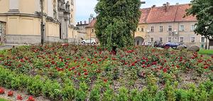 mit Blumen bepflanzter Park